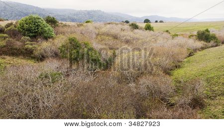 Riparian Landscape at Tomales Bay
