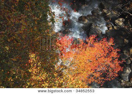 Colorful  Leaves In Gully  Matsukawa
