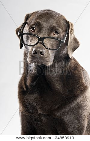 Choc Lab in Glasses