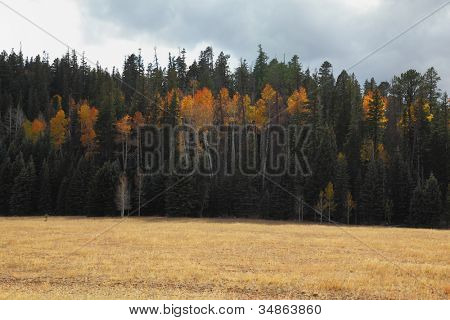 Fields and forests on the road to the northern survey area / North Rim / Grand Canyon in the U.S
