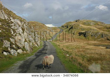 SHEEP ON A LONG IRISH ROAD