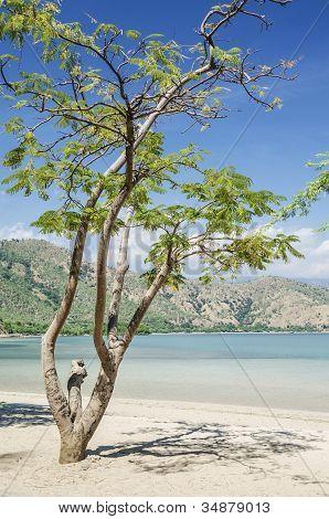Areia Branca Beach Near Dili East Timor