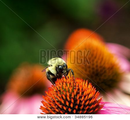 Bee And Pollination