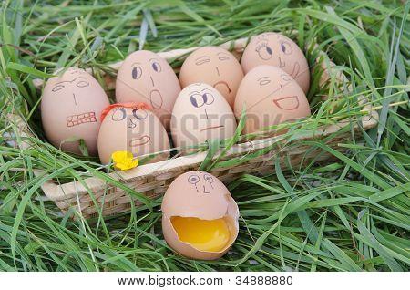 Eggs Family