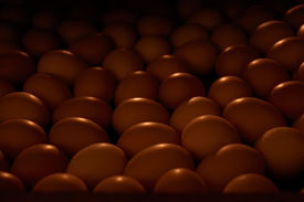picture of hatcher  - Rows of chicken eggs in an incubator in low light - JPG