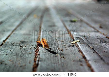 Leaf On The Veranda