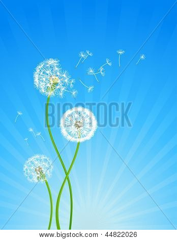 Summer background with dandelion flowers