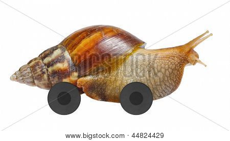 Speedy snail on wheels isolated on white background
