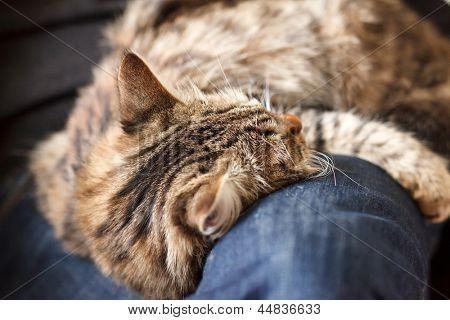 hombre sentado en el sillón holding y acariciar mascotas gato