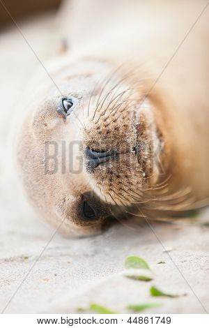 Close up portrait of a sea lion at beach