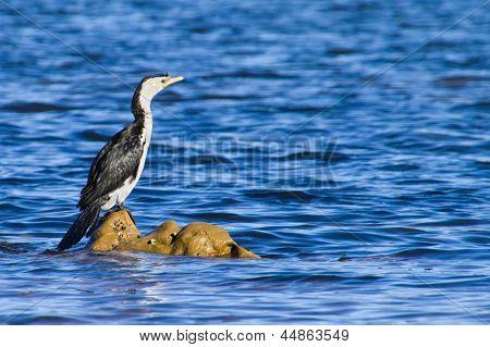 Cormorant sitting on rocks