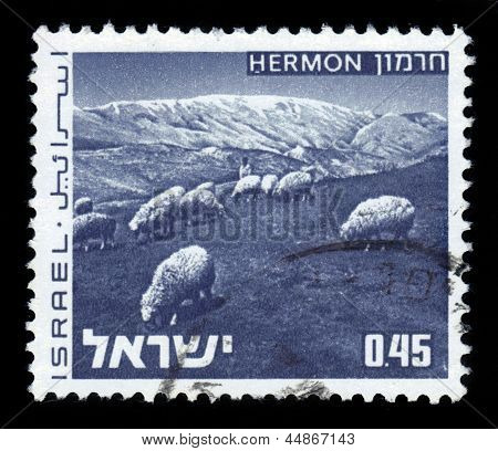 Herd Of Sheep On Mount Hermon