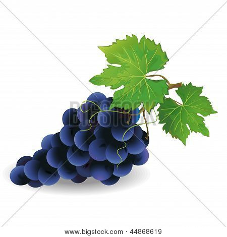 Realistic Black Grape Isolated