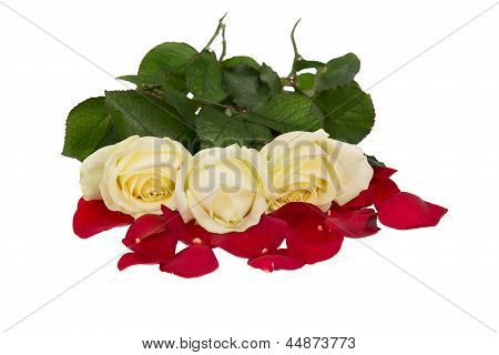 Italian Roses. Red, White And Green. Isolated On White