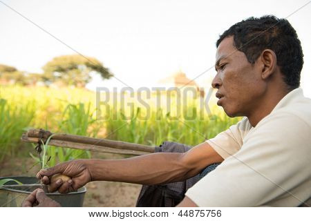 Portrait Traditional Asian male farmer working in corn field