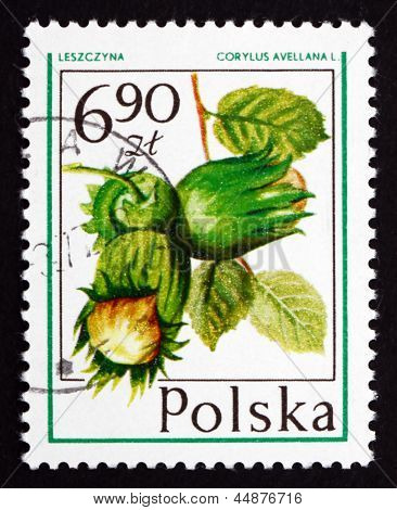 Postage Stamp Poland 1977 Hazelnut, Forest Fruit