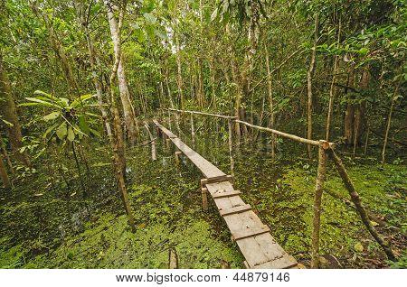 Simple Bridge Across A Rain Forest Pond