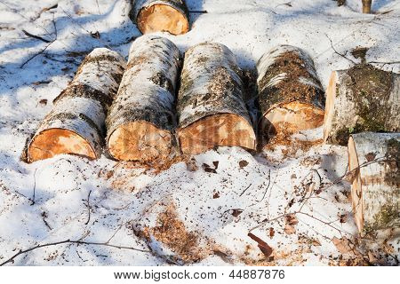 Stack Of Firewoods On Snow
