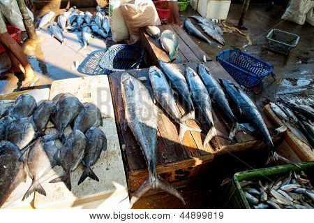 Raw Fish At Local Fishmarket In Sri Lanka