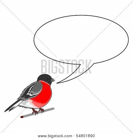 A Funny Bullfinch With A Chatting Bubble
