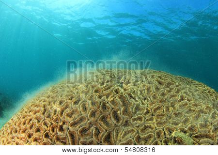 Coral spawning underwater