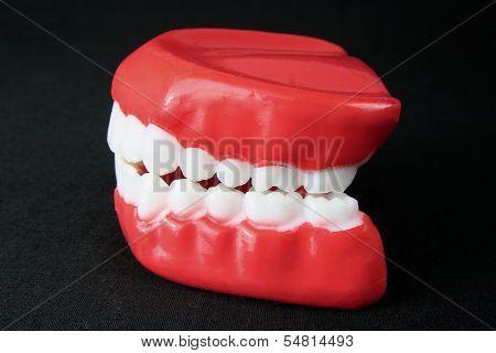 Denture Model