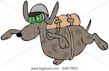 Skydiving dog