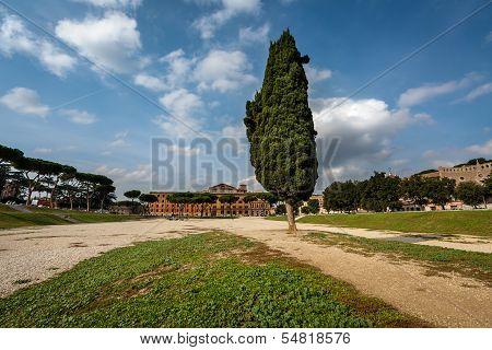 Cypress Tree On Circus Maximus, Ancient Roman Stadium Near Palatine Hill, Rome, Italy