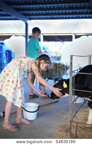 Happy little girl caresses small cute calf at cow farm at summer day. Boy rolls barrow. Focus on girl.