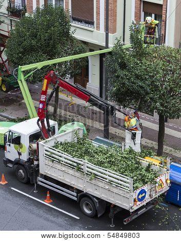LOGRONO, LA RIOJA, SPAIN - OCTOBER 22: Gardeners prune trees