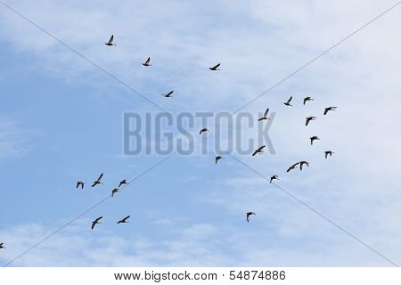 Flying Birds In The Sky