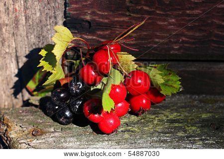 Viburnum Berries And Black Mountain Ash