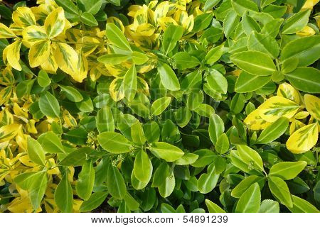 a mixture of green and yellow leaves