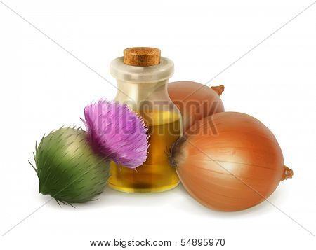 Onion and burdock, folk medicine vector illustration