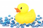 image of baby duck  - rubber duckie with warter marbles - JPG