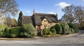 foto of english cottage garden  - Pretty thatched English cottage with topiary box hedging - JPG