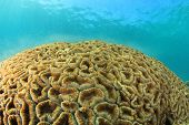 foto of spawn  - Coral spawning underwater - JPG