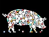 picture of pig-breeding  - Tablets - JPG