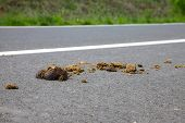 stock photo of excrement  - Horse excrement on the asphalt surface - JPG