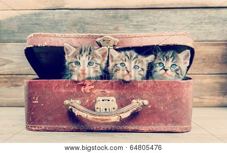 Kittens Are Sitting In Suitcase