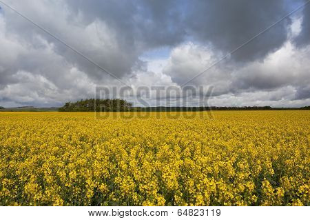 Storm Clouds Over A Golden Landscape