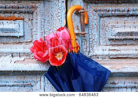 Beautiful tulips in umbrella on old wooden doors