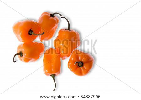Colorful Fresh Habanero Peppers