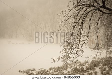 Foggy Winter Lake And Sailfish With Covering The Branches Of Trees In Forest, Vintage Style