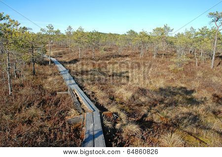 Wooden Path In Bog