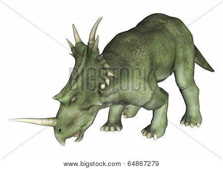 Drinking Dinosaur Styracosaurus
