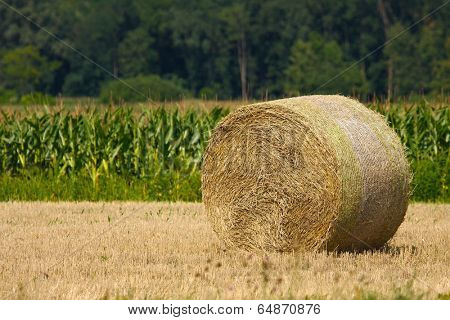 Dry rural field with hay stacks