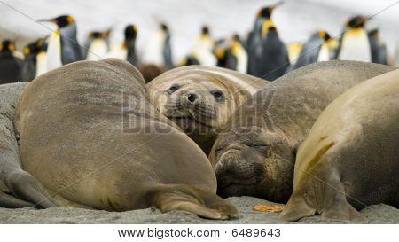 Seals Taking A Break