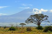 stock photo of kilimanjaro  - Snow on top of Mount Kilimanjaro in Amboseli - JPG