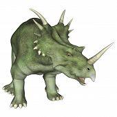 Постер, плакат: Aggressive Dinosaur Styracosaurus